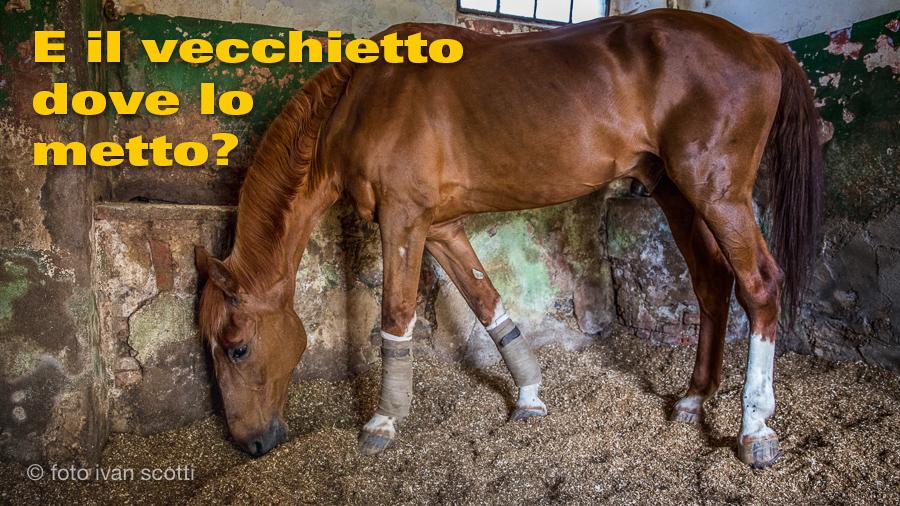 Art Cristina Cavallo Anziano